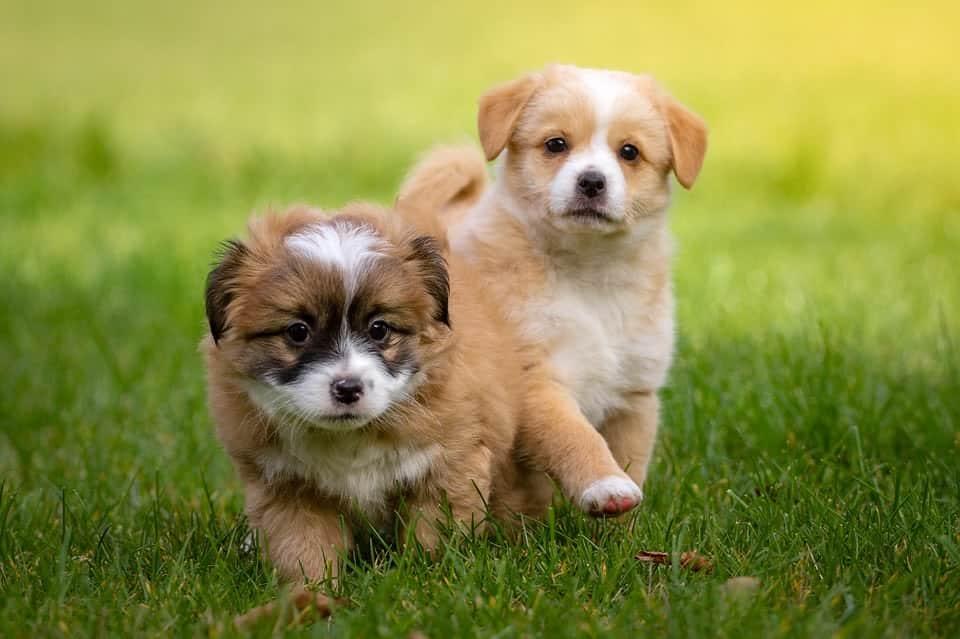 Mama, kann ich einen Hund haben? | Anschaffung eines Hundewelpen