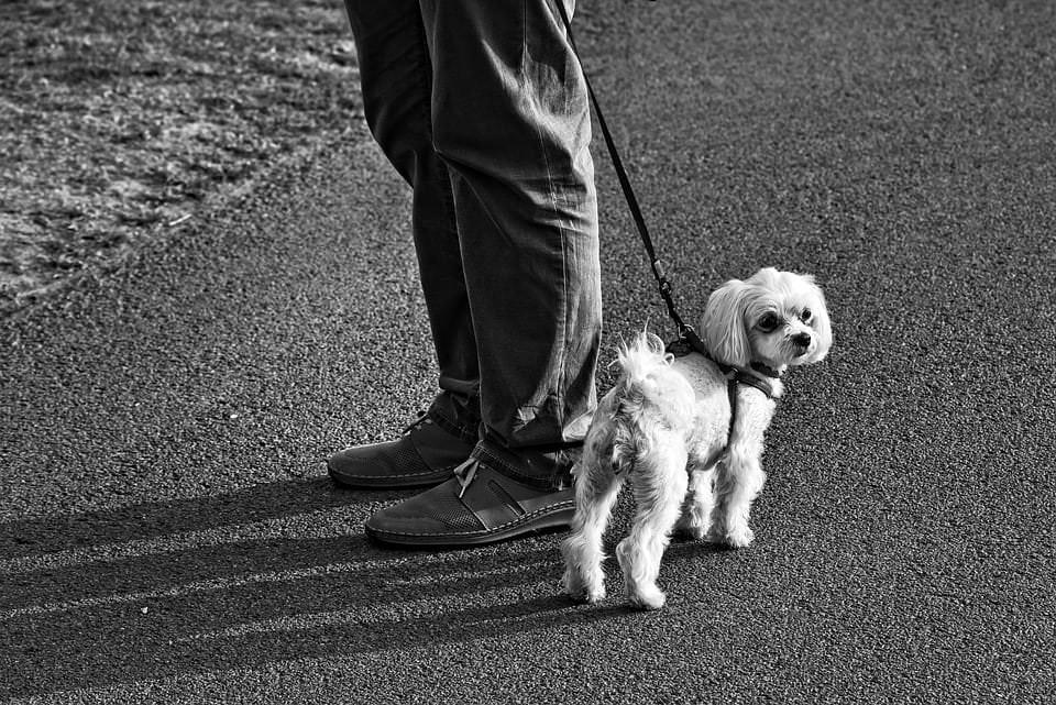 Ratgeber-Webseiten für Hundebesitzer