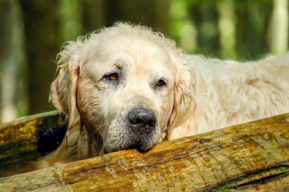 Hunde im Alter | 5 Tipps für ein langes Hundeleben