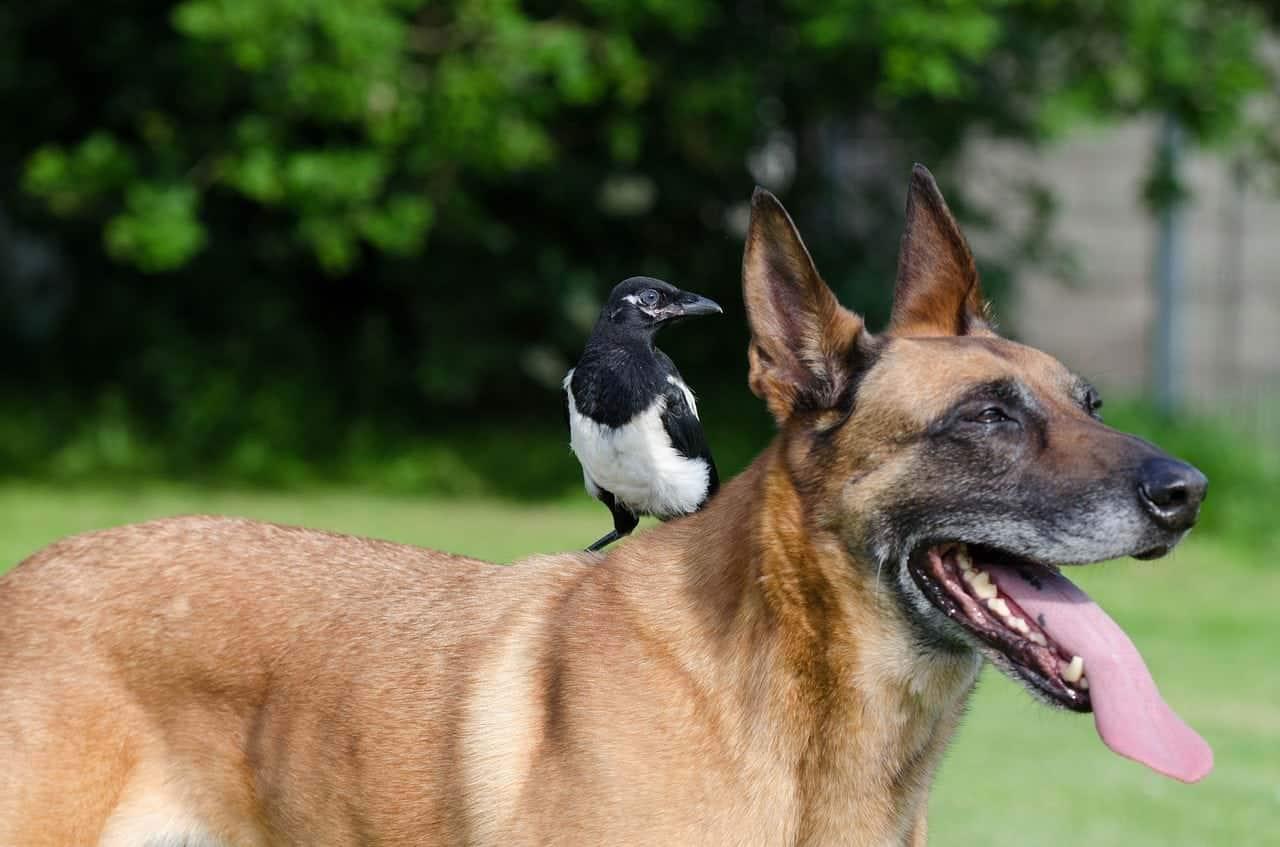 Top 7 der schönsten Tierfreundschaften
