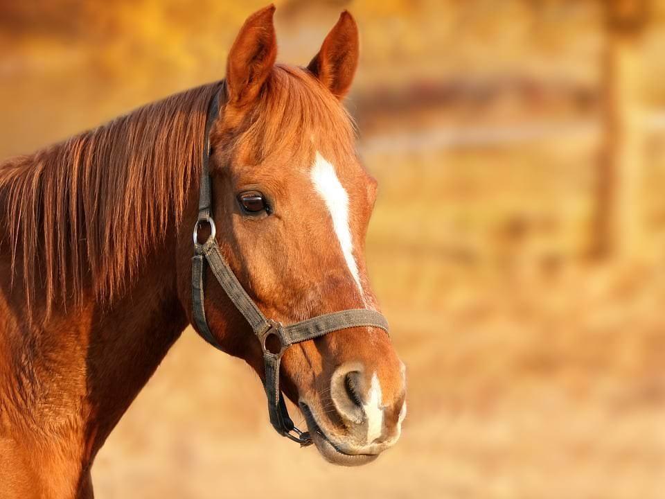 Was kann Magnetfeldtherapie für Pferde erreichen?