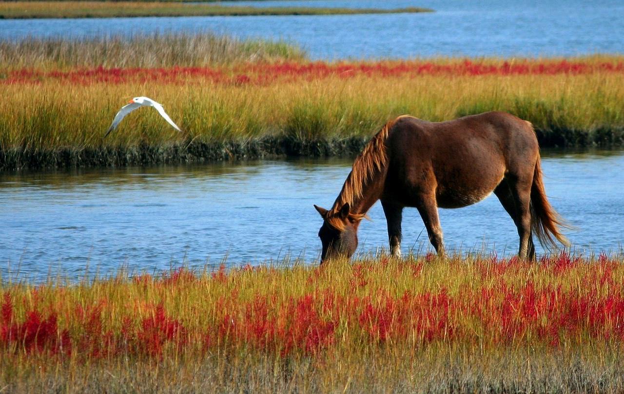 Vitamine, Fliegenschutz, Shampoo und Co für Pferde – muss das sein?