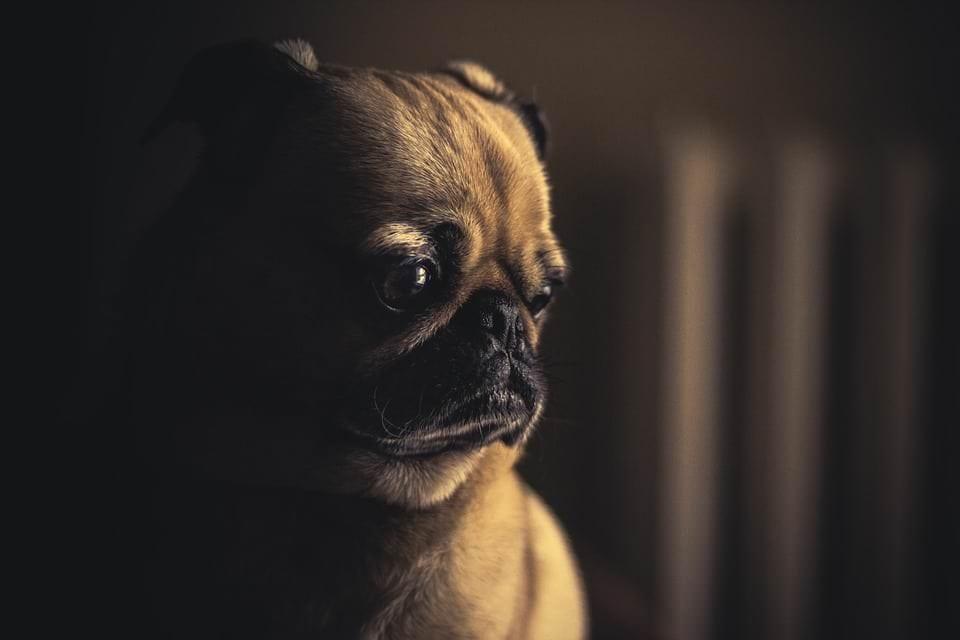 Bettwanzen beim Hund – so gehen Sie vor