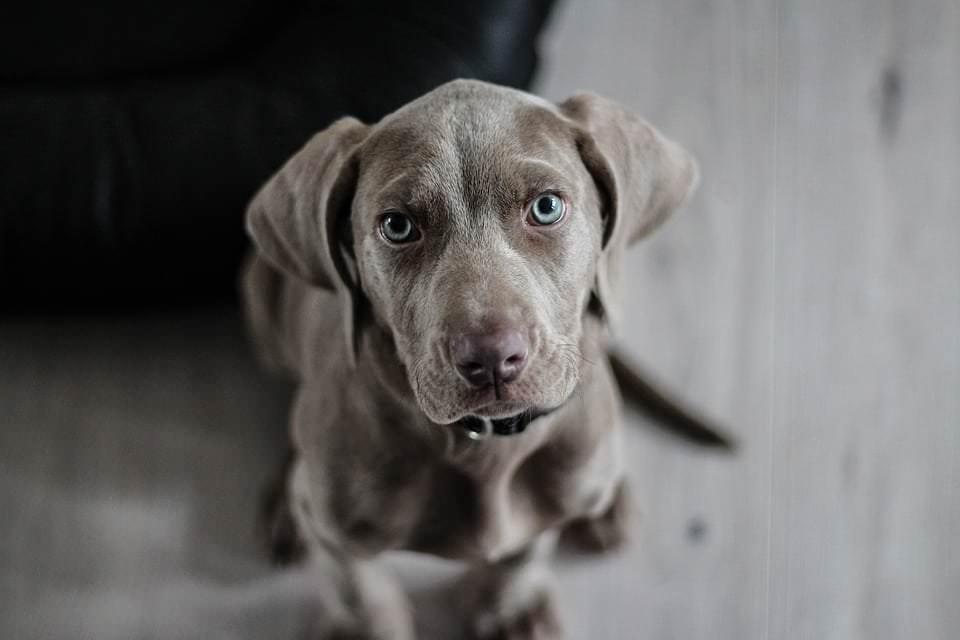 Die Körpersprache des Hundes