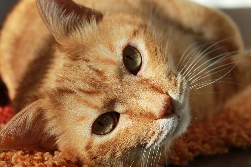 Top 7: Die beliebtesten Haustiere