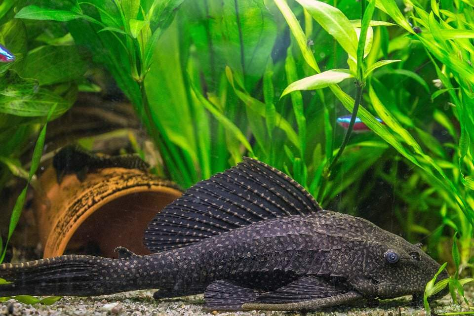 Top 7 der pflegeleichtesten Aquarienfische