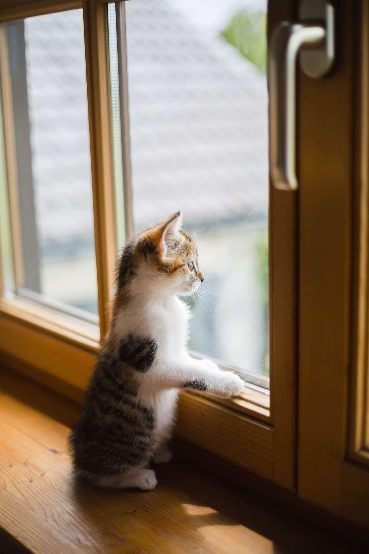 Wie sinnvoll sind Katzenschutzgitter?