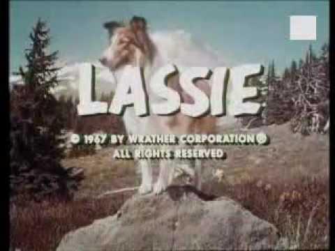 Hunde aus Film und Fernsehen Teil 1: Lassie