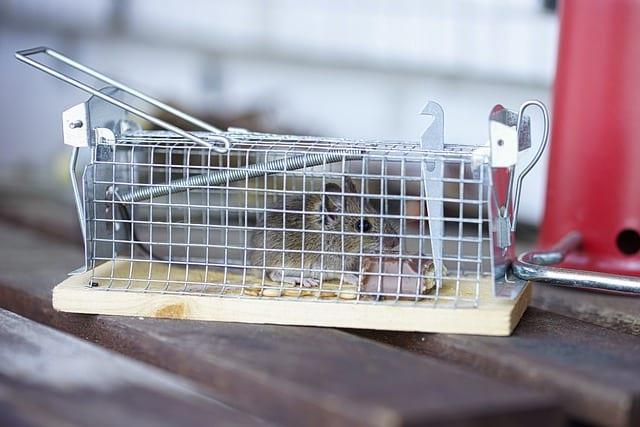 Die Mittel der modernen Schädlingsbekämpfung