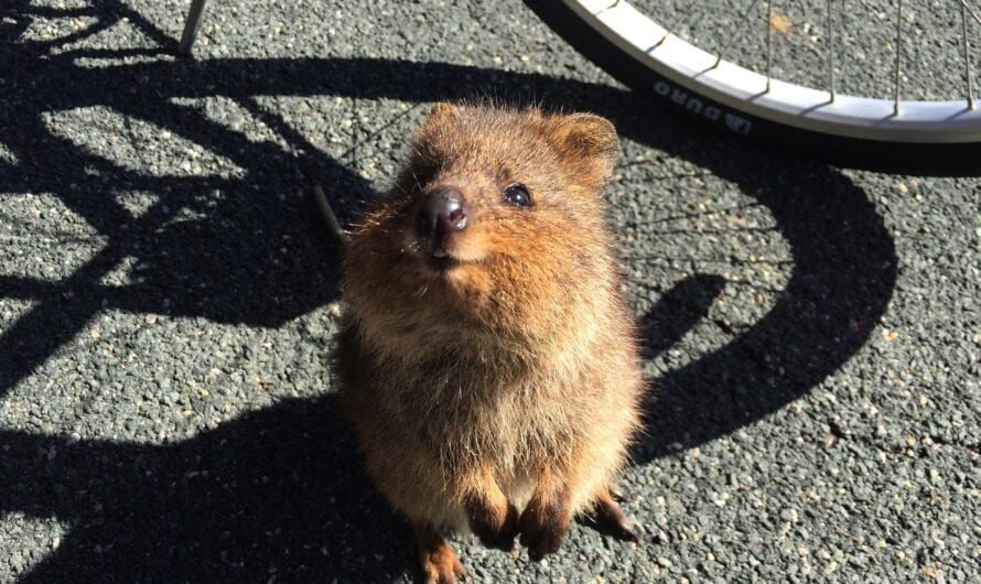 Top 7 der süßesten Tiere