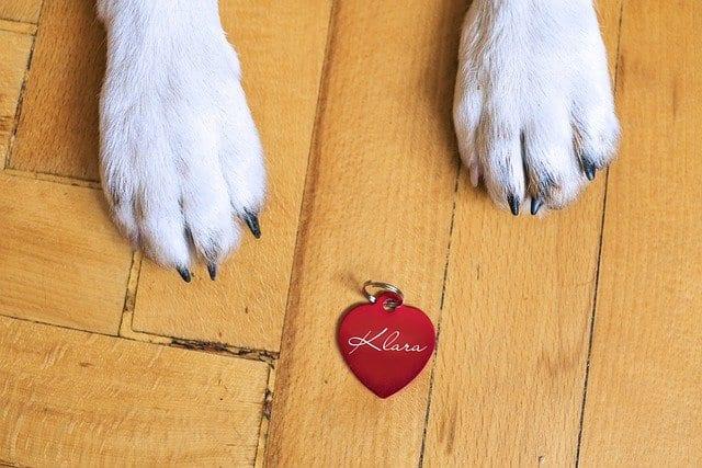 Hundehalsband und Hundemarke