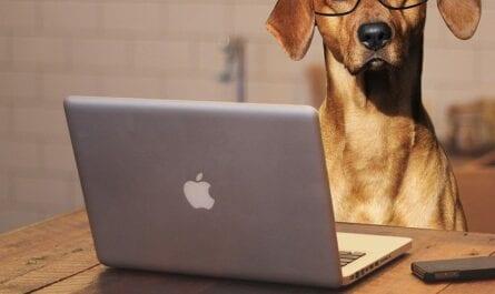 Blogs für Hundebesitzer