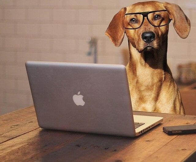 Blogs sind für Hundebesitzer:innen so wichtig